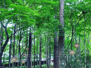公園,森林,木,屋外,緑,樹木,松ぼっくり,草木,飾り