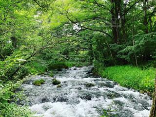 自然,森林,屋外,川,水面,水辺,滝,草,樹木,ジャングル,運河,草木,急速,水辺の森,州立公園,自然保護区,水資源,河川地形