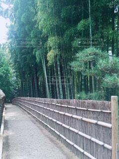 竹林の道の写真・画像素材[4409249]