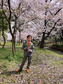 風景,公園,花,桜,屋外,花束,草,樹木,人物,人,男の子,新一年生,新生活,草木,新入生,男の子スーツ