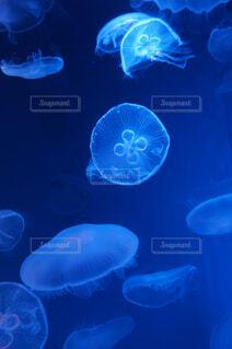 水中のクラゲの写真・画像素材[4380102]