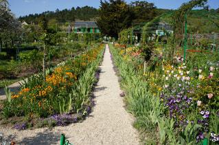 モネの庭園の写真・画像素材[4382114]