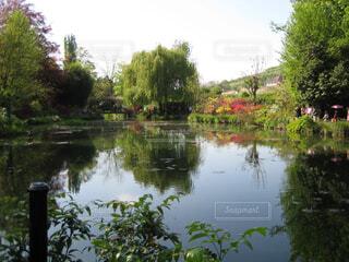 モネの池の写真・画像素材[4382115]
