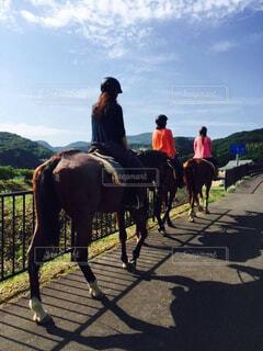 自然,風景,空,動物,屋外,雲,馬,日中,乗馬
