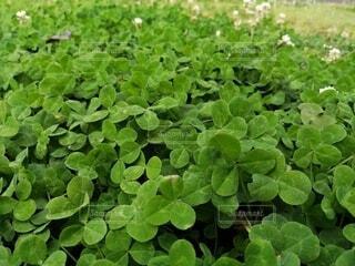 緑の植物のグループの写真・画像素材[4459898]