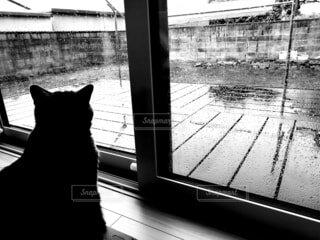 窓の前に座っている猫の写真・画像素材[4553960]