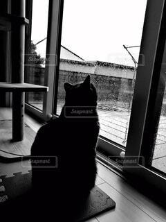 窓の前に座っている猫の写真・画像素材[4553961]