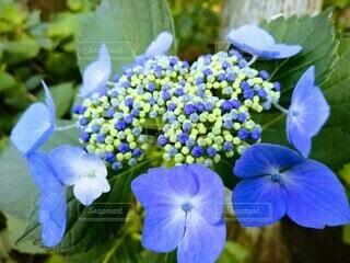 花のクローズアップの写真・画像素材[4556022]