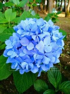 花のクローズアップの写真・画像素材[4556021]