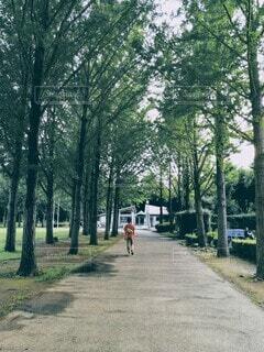 夏の銀杏並木の写真・画像素材[4592626]