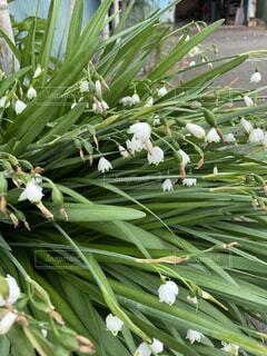 花,緑,樹木,草木,フローラ