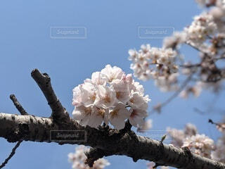 空,花,春,屋外,樹木,ブルーム,ブロッサム