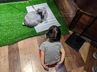 ウサギさん観察の写真・画像素材[4585691]