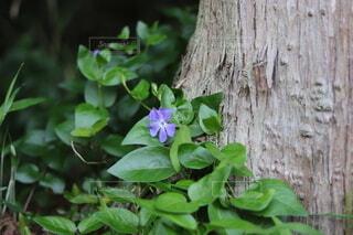 自然,花,春,木,屋外,紫,草,樹木,蔦,草木,新しい,4月,フローラ
