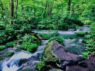 自然,風景,森林,屋外,滝,草,樹木,岩,渓流
