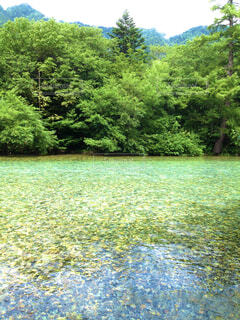 自然,風景,アウトドア,公園,屋外,湖,水面,池,トレッキング,樹木,草木