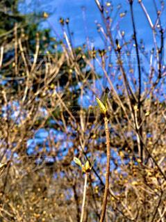 自然,花,春,屋外,樹木,蕾,草木,新しい