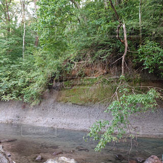 自然,森林,屋外,湖,森,水面,景色,樹木,河川敷,キャンプ,地面,流木,草木,河床,垂れ技