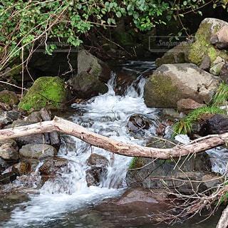 自然,森林,屋外,森,川,水面,水辺,滝,岩,キャンプ,石,流木,草木,岩石,河床