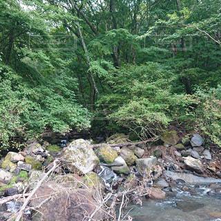 自然,森林,屋外,森,水面,樹木,岩,河川敷,キャンプ,石,流木,ジャングル,草木,岩石,河床
