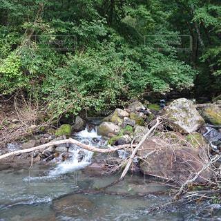自然,森林,屋外,森,川,水面,水辺,滝,樹木,岩,キャンプ,石,流木,運河,草木,岩石,河床
