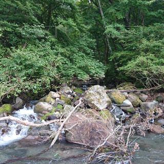 自然,森林,屋外,森,川,水面,水辺,滝,樹木,岩,キャンプ,石,流木,運河,草木,岩石,河床,ガリー,ストリーム