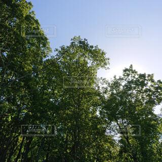 風景,空,夏,庭,屋外,樹木,土,キャンプ,涼,日陰,草木,日中