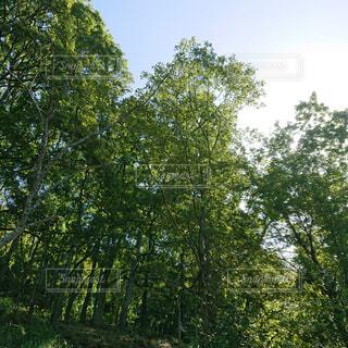 風景,空,夏,森林,庭,屋外,樹木,新緑,土,キャンプ,涼,草木,日中,エリア