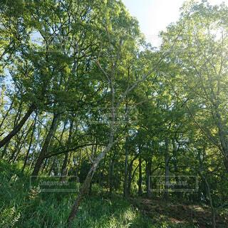 風景,空,夏,森林,木,庭,屋外,樹木,新緑,土,キャンプ,涼,日陰,草木,日中,エリア