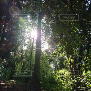 自然,空,公園,森林,屋外,日光,景色,木漏れ日,樹木,新緑,土,高原,ジャングル,日陰,草木,ポプラ,山腹