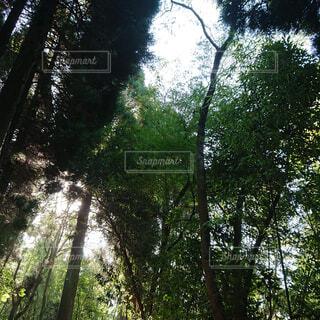 自然,空,公園,森林,木,屋外,日光,木漏れ日,樹木,新緑,土,ジャングル,日陰,草木,山腹,エリア