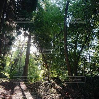 自然,空,公園,森林,木,屋外,木漏れ日,樹木,新緑,土,ジャングル,日陰,草木,ポプラ,山腹,エリア
