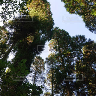 空,公園,秋,森林,屋外,葉,景色,木漏れ日,樹木,新緑,土,高原,草木,ポプラ,山腹