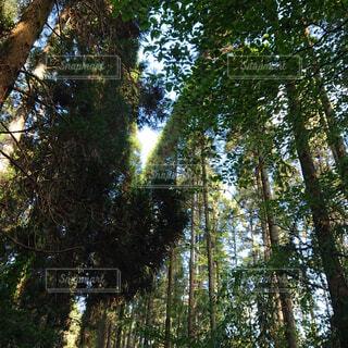 空,公園,秋,森林,木,屋外,葉,景色,木漏れ日,樹木,新緑,土,高原,草木,日中,ポプラ,山腹