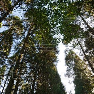 空,公園,秋,森林,屋外,葉,景色,木漏れ日,樹木,新緑,土,高原,草木,日中,ポプラ,山腹