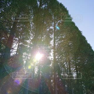 自然,空,公園,秋,森林,屋外,太陽,草原,日光,景色,樹木,新緑,土,高原,草木,日中,山腹