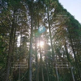 空,公園,森林,屋外,景色,木漏れ日,樹木,新緑,土,高原,草木,日中,ポプラ,山腹