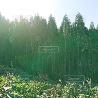 自然,風景,空,森林,木,屋外,緑,水面,景色,樹木,新緑,土,キャンプ,朝,日陰,草木,日中,山腹