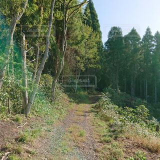自然,風景,森林,木,屋外,景色,草,樹木,新緑,土,キャンプ,朝,ジャングル,日陰,草木,日中,パス