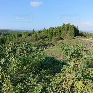 自然,風景,空,森林,木,屋外,緑,日光,草,丘,樹木,新緑,土,ジャングル,日陰,草木,山腹,エリア