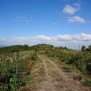 自然,風景,空,木,屋外,草原,雲,景色,木漏れ日,草,丘,樹木,大地,新緑,土,高原,草木,日中,山腹