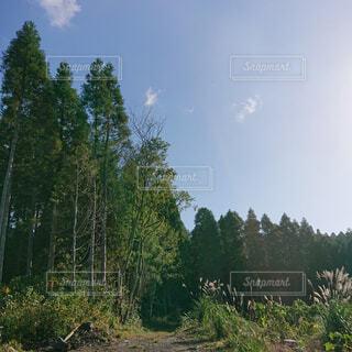 自然,空,森林,木,屋外,雲,景色,樹木,新緑,キャンプ,高原,草木,日中,山腹