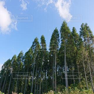 自然,風景,空,森林,木,屋外,雲,景色,樹木,新緑,キャンプ,高原,草木,日中,ポプラ,山腹