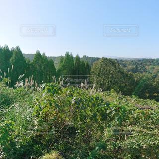 自然,風景,空,花,森林,屋外,景色,樹木,新緑,高原,草木,山腹