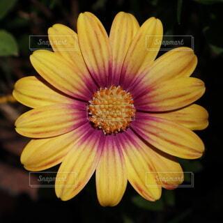 自然,風景,花,屋外,植物,黄色,景色,花びら,鮮やか,元気,ビタミンカラー,デイジー,イエロー,クローズアップ,草木,情熱的,アフリカンデージー,デージー,ジニア,アフリカ デイジー,フローラ