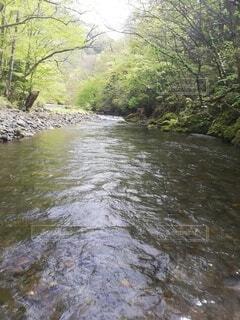 水域を流れる川の写真・画像素材[4389650]