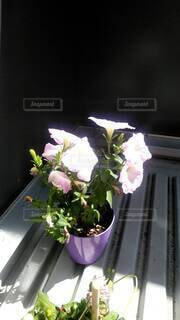 屋内,花瓶,バラ,薔薇,観葉植物,草木