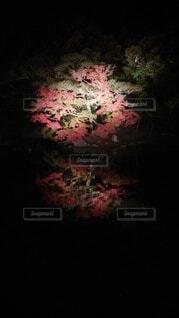 花,秋,紅葉,暗い,池,ライトアップ