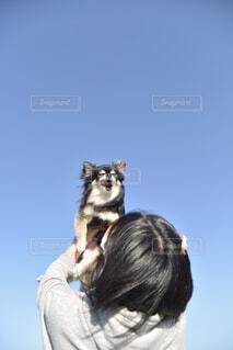 抱っこされるチワワの写真・画像素材[4393301]