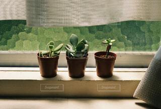 観葉植物の写真・画像素材[4359997]